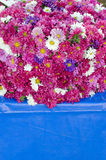 Aster flowers in asia market Royalty Free Stock Photography