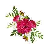 Aster flowers autumn composition Stock Photo