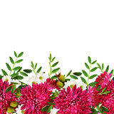 Aster flowers autumn composition Stock Image
