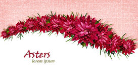 Aster flowers background Royalty Free Stock Photo
