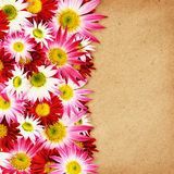 Aster flowers border Royalty Free Stock Image