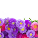 Aster flowers border Royalty Free Stock Images