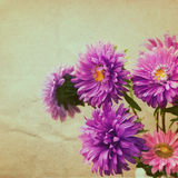 Aster flowers bouquet  in retro style Stock Photo