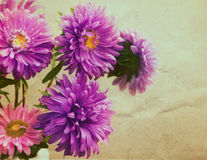 Aster flowers bouquet  in retro style Royalty Free Stock Photo