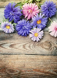 Aster flowers bouquet in retro style Royalty Free Stock Images