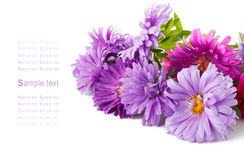 Aster Flowers Bouquet Royalty Free Stock Photography