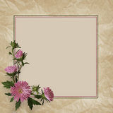 Aster flowers composition and frame. On gray background Stock Photos