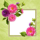 Aster flowers composition and frame Stock Photography