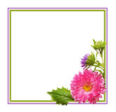 Aster flowers composition and frame Royalty Free Stock Images