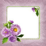 Aster flowers composition and frame Stock Photos