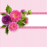 Aster flowers composition and a frame Royalty Free Stock Photos