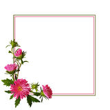 Aster flowers composition and frame Stock Photo