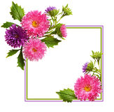 Aster flowers composition and frame Royalty Free Stock Photos