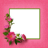 Aster flowers composition and frame Royalty Free Stock Photo
