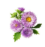 Aster flowers composition Royalty Free Stock Photography
