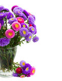 Aster flowers Stock Image