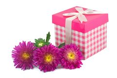 Aster flowers and gift box Royalty Free Stock Photos