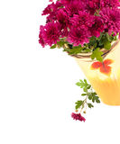 Aster Flowers isolated on white background Stock Image