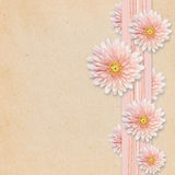 Aster flowers on pink background Stock Images