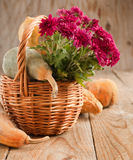 Aster Flowers and pumpkins in basket Stock Photos