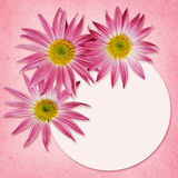 Aster flowers and a round frame Royalty Free Stock Image