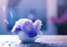 Aster flowers in a vase Stock Photography