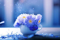 Aster flowers in a vase Royalty Free Stock Image