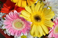 Aster, gerbera and daisy flowers yellow red and pink with drop of water Stock Images