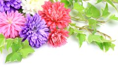 Aster and ivy Royalty Free Stock Photos