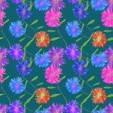 Aster, Michaelmas-madeliefje Naadloze patroontextuur van bloemen FL royalty-vrije illustratie
