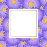 Aster pourpre, Daisy Flower Banner Card Illustration de vecteur illustration libre de droits