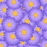 Aster pourpre, Daisy Flower Seamless Background Illustration de vecteur illustration libre de droits