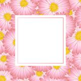 Aster rose, Daisy Flower Banner Card Illustration de vecteur Illustration Stock