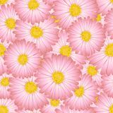 Aster rose, Daisy Flower Seamless Background Illustration de vecteur illustration de vecteur