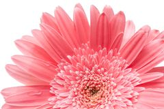 aster Schöne Blume auf hellem Hintergrund Lizenzfreies Stockbild