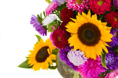 Aster and sunflowers Stock Photo