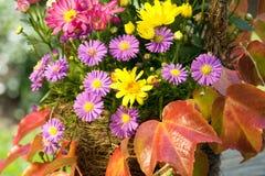 Aster- und Herbstblätter stockbilder