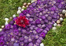 Aster Violet Green Flowerbed Stock Photo