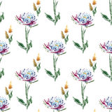 Aster watercolor  floral seamless pattern. Aster with leaves and field grass whisk watercolor on the white background  floral seamless pattern Royalty Free Stock Photos