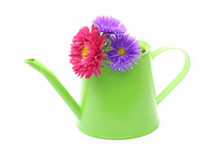 Aster in a watering can Royalty Free Stock Photography