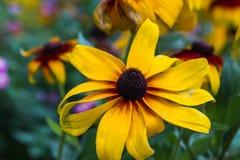 Asteraceae at Batumi Botanical Garden Stock Images