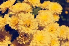 Asteraceae in a botanical garden Stock Photo