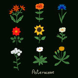 Asteraceae flowers set Royalty Free Stock Images