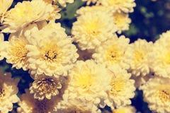 Asteraceae in un giardino botanico immagini stock libere da diritti