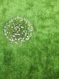 Asterblomma på grönt gräs Arkivfoton