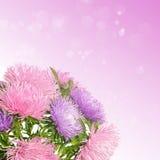 Asterblumen Stockfotografie