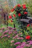 Asterblumen für die Gartenhäuschen-Herbstlandschaft entwerfen Lizenzfreie Stockfotografie