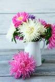 Asteres coloridos en un florero blanco imagen de archivo