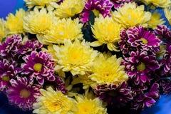 asteres y crisantemos amarillos, ramo de flores, primer de la lila foto de archivo libre de regalías