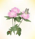 asteres y mariposa Imagen de archivo libre de regalías